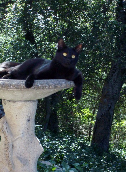 This is one relaxed cat in Julian!