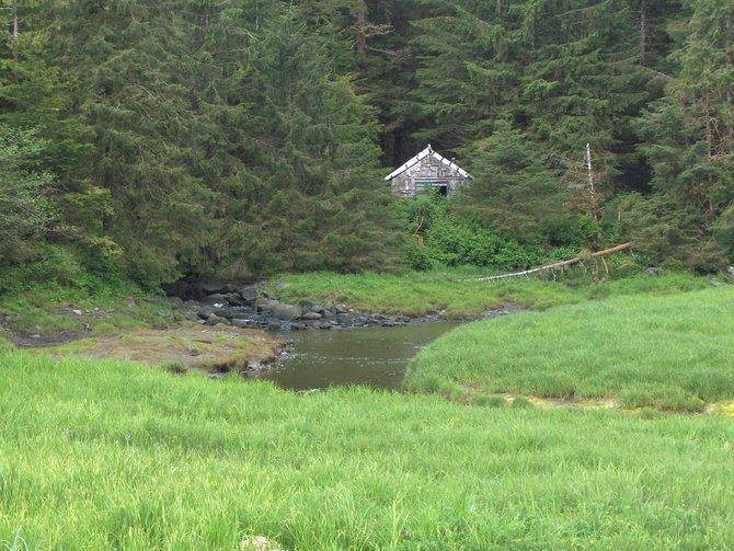 Beautiful meadow near Seward, Alaska. Move-in ready!