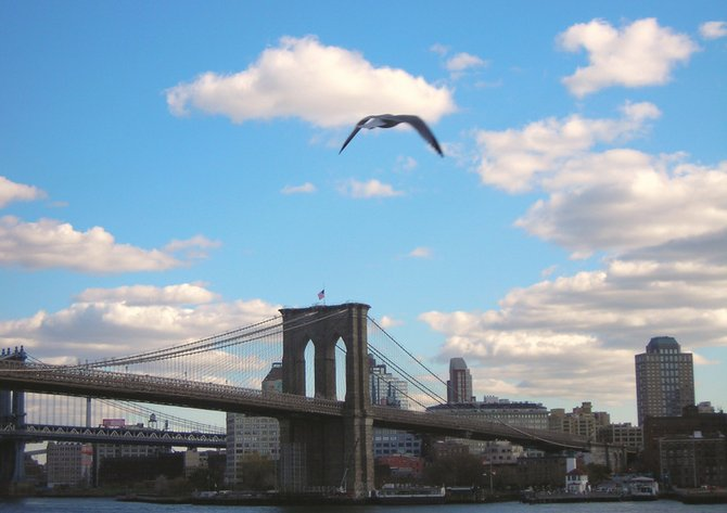 Flight to NYC- A Gull's Story