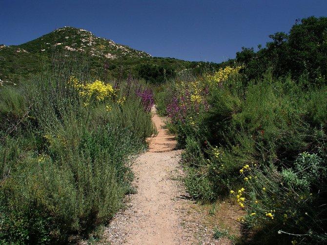 Stromfeld and Cooper Family Trail, Rancho Bernardo, California, May 2011