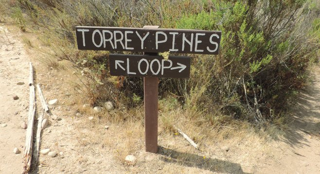 Hikers on the the well-marked Torrey Pines Loop Trail can see a rare California native citrus bush and the rarest pine species in the nation.