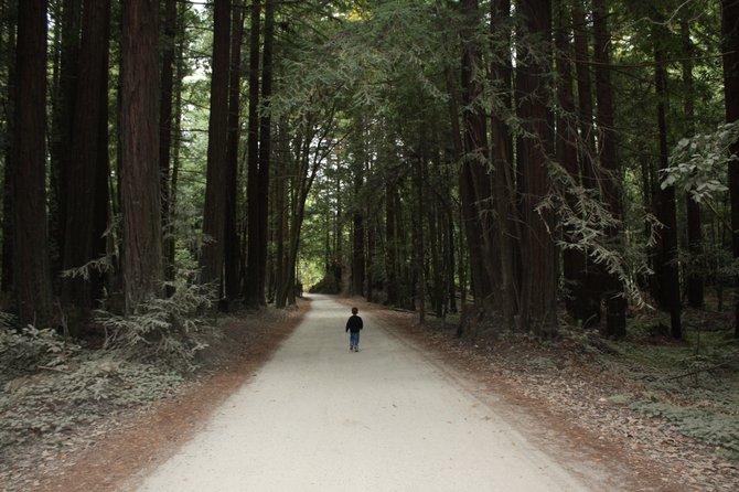 Santa Cruz Redwoods - Among the giants