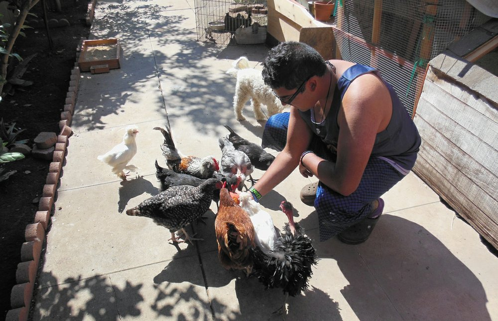 José feeds the chickens a peach
