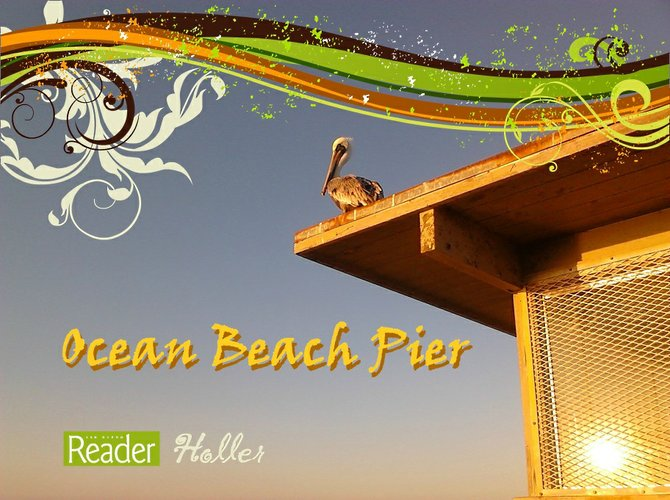 Ocean Beach Pier Pelican