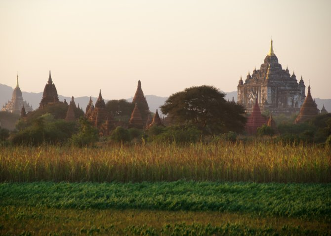 The temples of Bagan provide a stunning backdrop to this field of wheat. Myanmar (Burma).