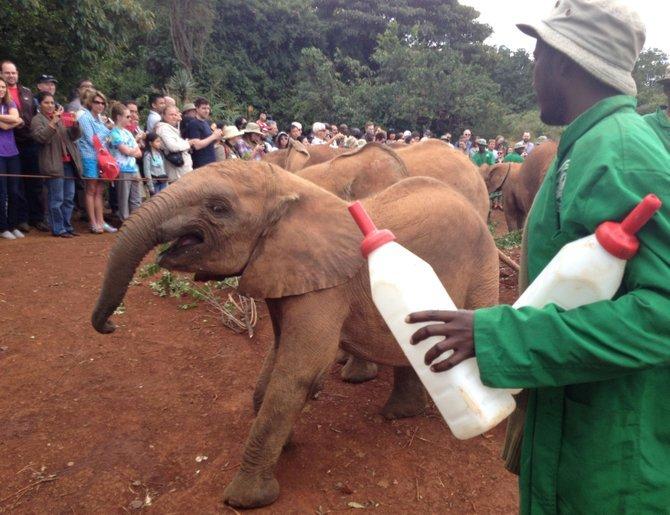 Bottles of formula for the orphaned elephants are jumbo-sized.