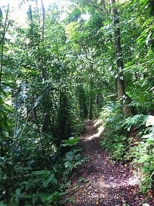 Jungle trail, Frog Beach.