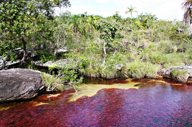 Cano Cristales, the most beautiful river in the world
