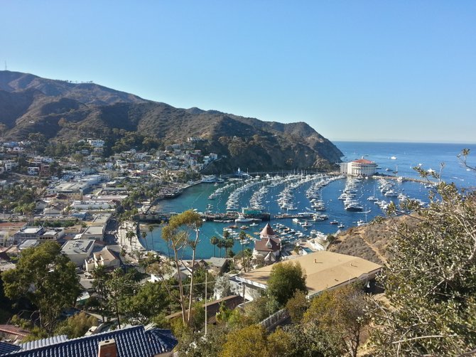 Overlooking Catalina Island from the top of the hill.
