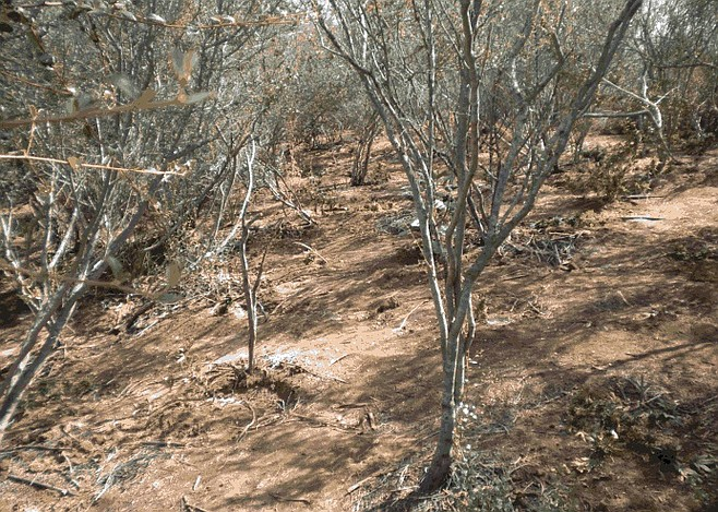Location of farm discovery. Photo: San Diego Sheriff
