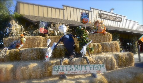 Bates Nut Farm has plenty of pumpkin fun to last the whole month of October. Photo Weatherston.