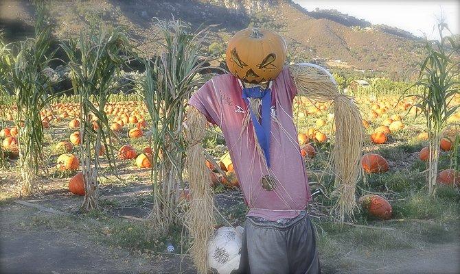 Go to batesnutfarm.biz to get the scarecrow contest entry form. Photo Weatherston