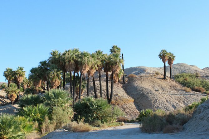 Oasis with Palm Trees in the Coachella Valley