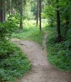 Forrest trail in Moscow, Russia.