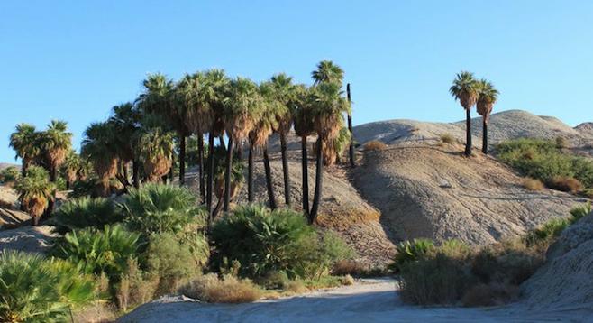 Coachella palm tree oasis on the jeep tour.
