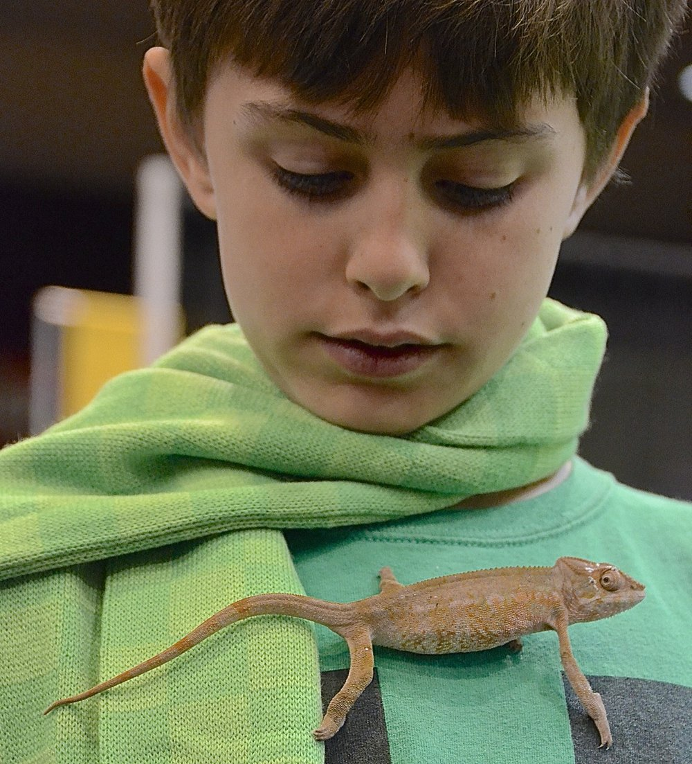 Lizard fun.  Ten-year-old Keith is trying on a chameleon. A man from Kammerflage Kreations said the lizard is a female Panther chameleon and is suitable for breeding. The agreeable lizard was valued at $429.