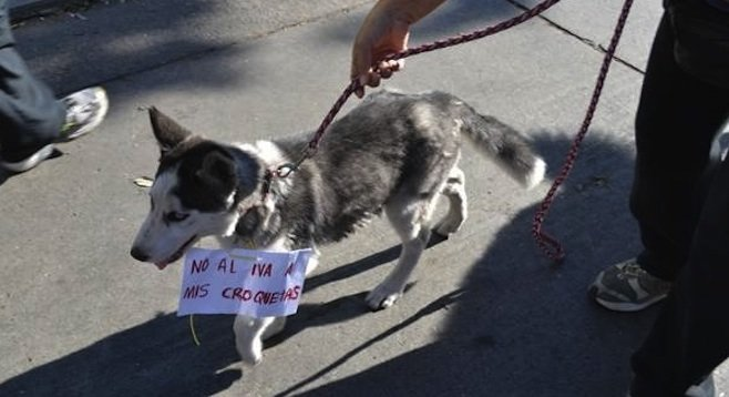 Pet joins unsuccessful protest against sales-tax increase (Photo: El Sol de Tijuana)