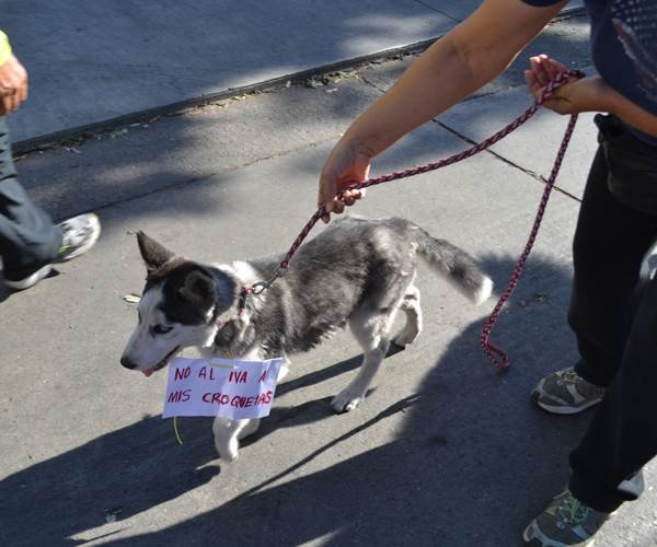 Pet joins unsuccessful protest against sales tax increase (Photo: El Sol de Tijuana)