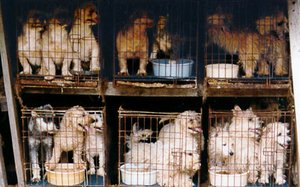 pups from puppy mills