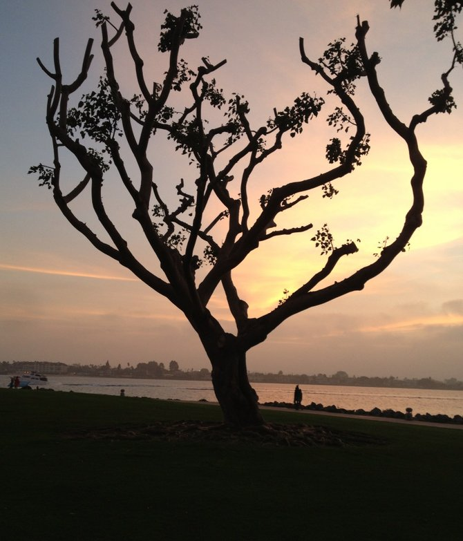 The essence of nature: simplicity. 
