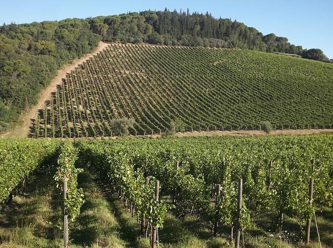 More vineyards.