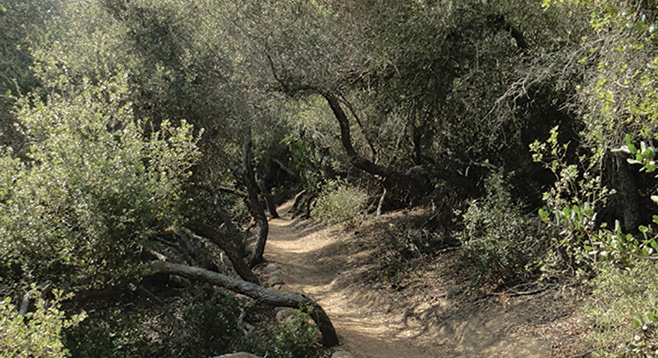 Los Pe 241 Asquitos Canyon Camino Ruiz Trailhead San Diego Reader