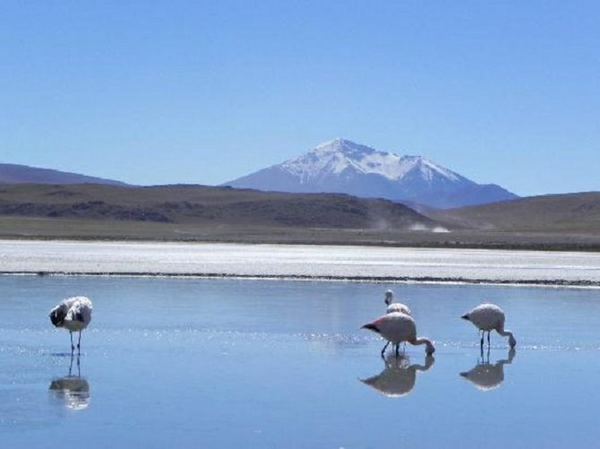 Flamingos are everywhere in the salt flats