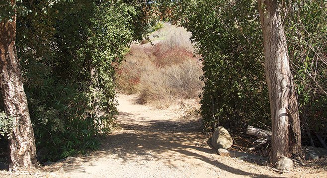 After the arch, the Highland Valley Trail travels east along the grasslands near the south shore of Lake Hodges.