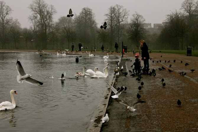 Hyde Park. London, England.