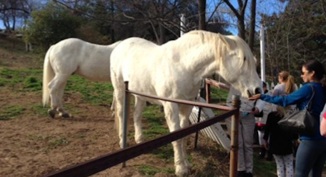 Horse-petting in Julian