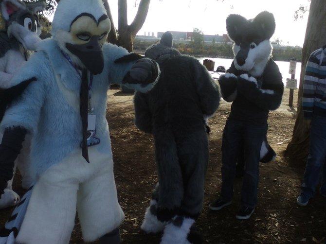 furries having fun