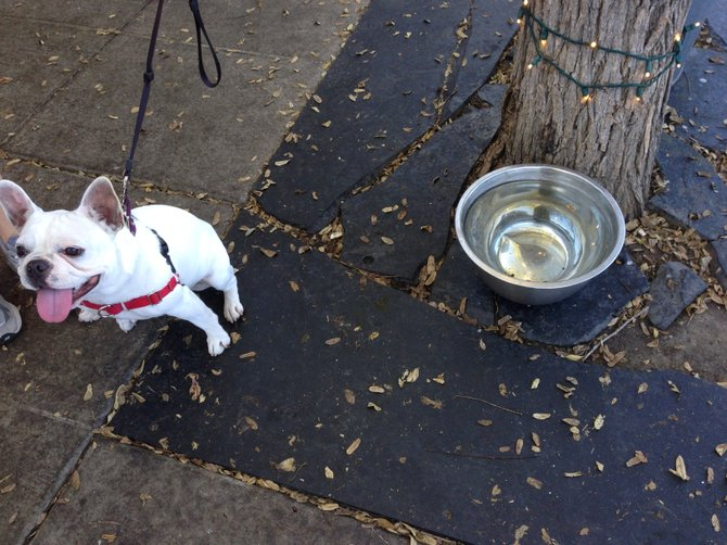 Puppies love drinking water out of a giant metal bowl.