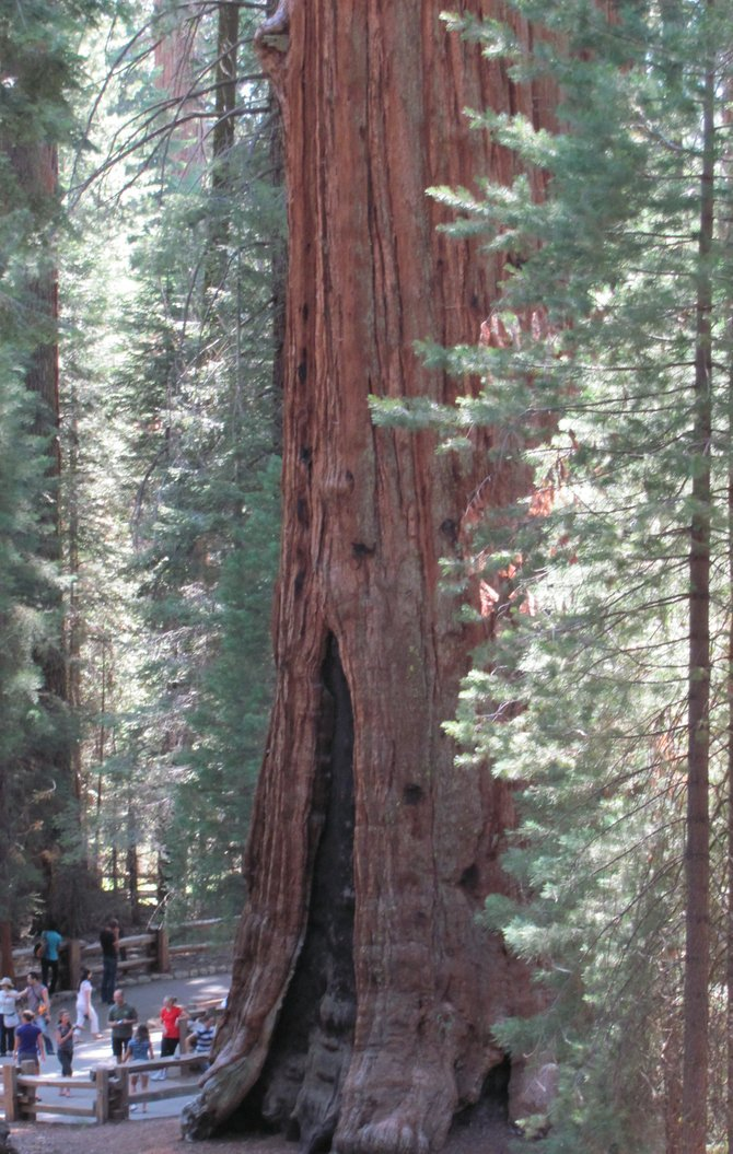 Sequoia National Park's General Sherman.