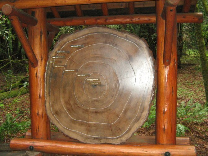 Cross-section tells a tree's age in Muir Woods National Monument.