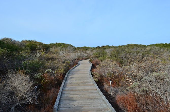 "The beautiful Elfin Forest Natural Preserve, located in Los Osos, near San Luis Obispo.  Features a mile of wooden walkways through pristine coastal chaparral.  The ""Elfin"" name comes from the stunted coast live oaks that rarely grow over 10-15 feet high in the sand here."