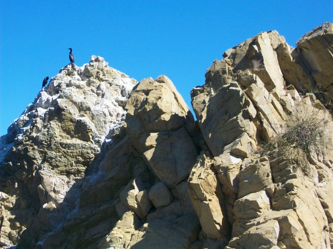 Rocky outcrop with bird in Avalon on Catalina Island.