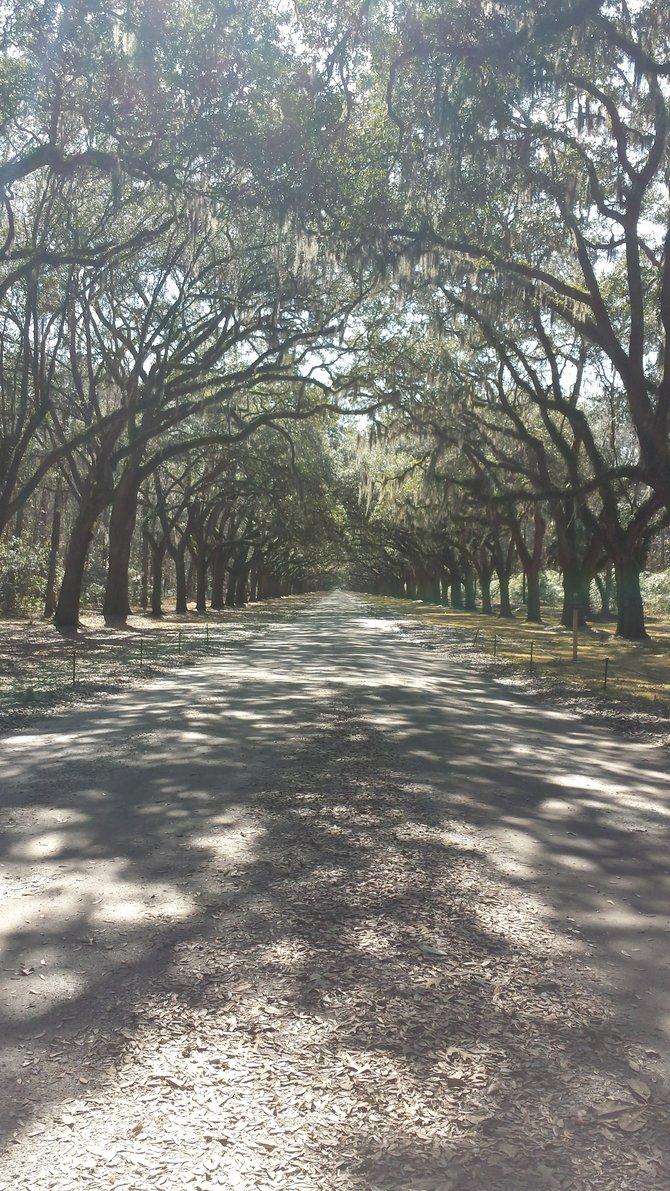 Wormsloe State Historic Site, Savannah GA