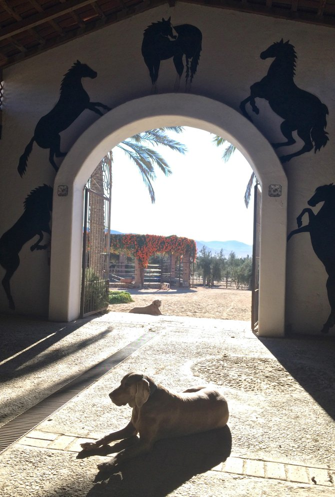 Wine, show horses, and hazy weimaraners are all fixtures at the Adobe Guadalupe guesthouse.
