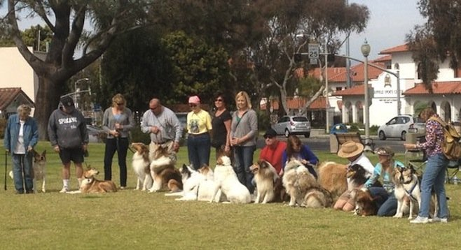 Rescued collies and their owners at Magee Park