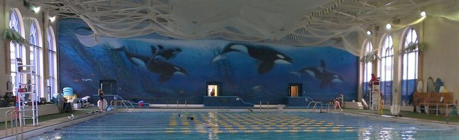 The original Orcas off Point Loma was painted in 1989 on an interior wall.