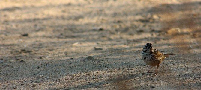 A bird on the path in Bonita.