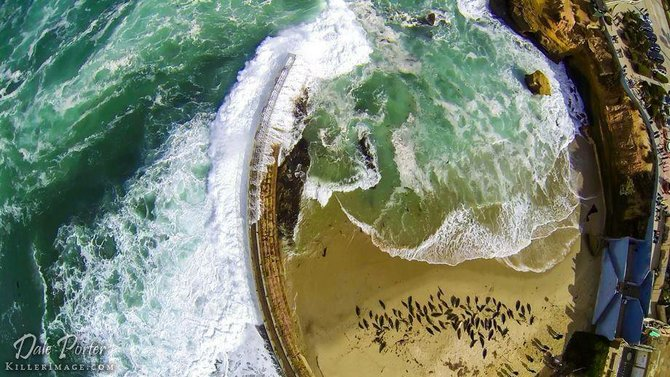 The view over the Children's Pool in La Jolla by Dale Porter.
