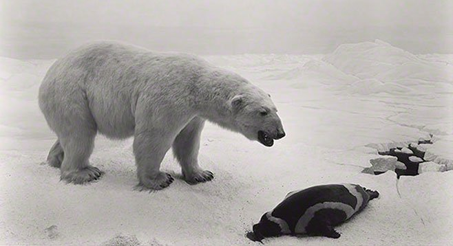 In Sugimoto's dioramas, a polar bear on an ice floe leans over a dead seal, as if in meditation.