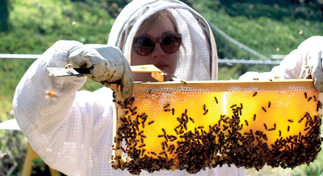Hilary Kearney, in her bee suit, inspects a section of backyard beehive.