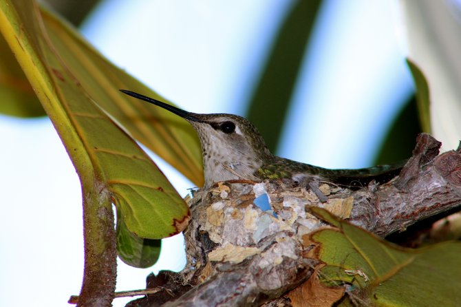 A humming bird in the garden.