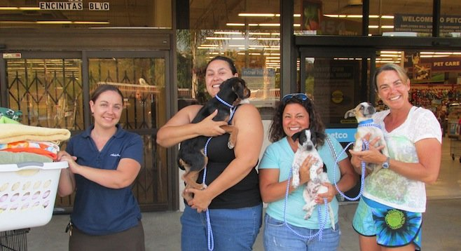 Helen Woodward staff member Shannon brings fresh towels and dog bowls while volunteers Blue, Caz, and Darcy take care of puppies at the Encinitas Petco.