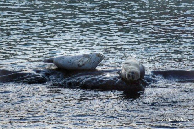 San Diego Seals