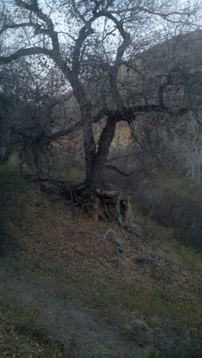 picture taken down in river bottoms in Sloan Canyon.