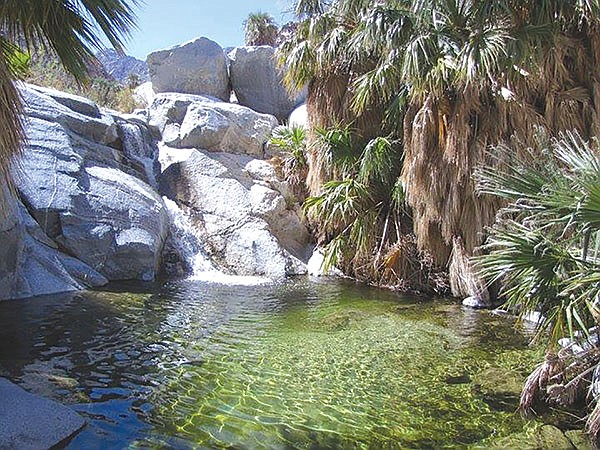Guadalupe Canyon Oasis
