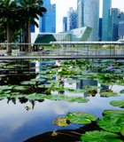 The crisp, clean beauty of Singapore is such a contrast to the rest of Indochina!